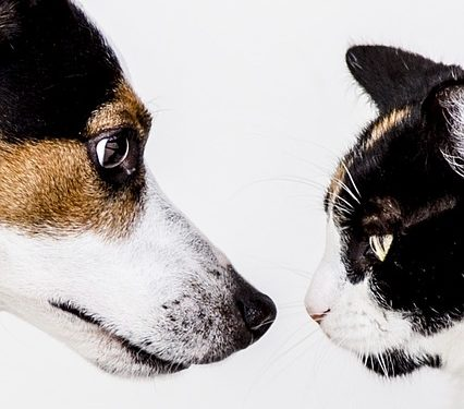 relationship between a cat and a dog